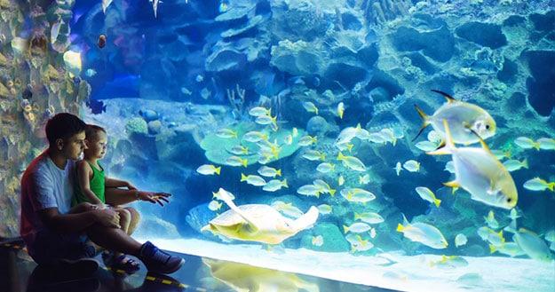 abyssnaut-catalogue-aquarium